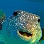acuriousfish