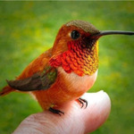 hmmmingbird