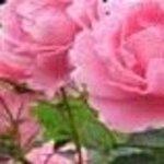 flower82