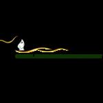 irvineskin