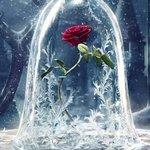 EnchantedRose