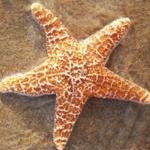 Starfishin_and_dancin
