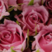 ckb_rose369